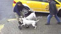 Pitbull dehşeti! Sokak köpeği kanlar içinde kaldı