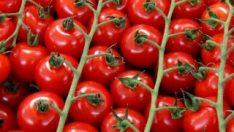 Rusya, Türkiye'den aldığı domatesi 2'ye katladı