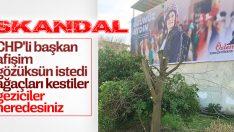 CHP'li Çerçioğlu kendi afişi için ağaçları kestirdi