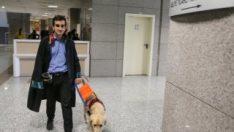 Görme engelli avukatın yoldaşı: Rehber köpek Tabs