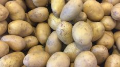 200 bin ton patates ithal edilecek!