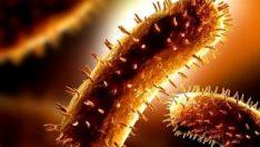 Hayvanlardan insanlara geçen bakteri ruh hastalıklarına