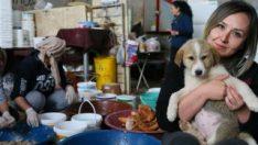 20 gönüllü, sahipsiz 600 köpeğe bakıyor