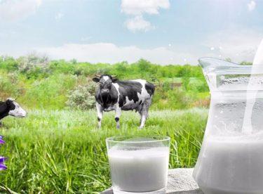 Soğutulmuş Çiğ Süt Tavsiye Fiyatı 2 TL Olarak Belirlendi